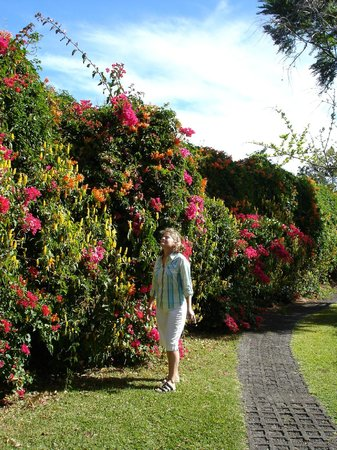 Hotel Bougainvillea:                   Beautiful flowers