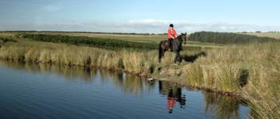 Springhill Farm Riding Stables: getlstd_property_photo