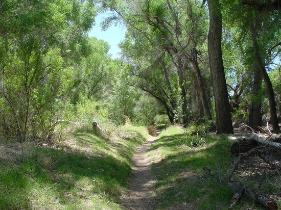 San Pedro Riparian National Conservation Area: On the trail