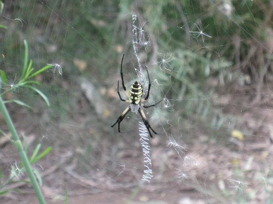 San Pedro Riparian National Conservation Area: The weird Spider