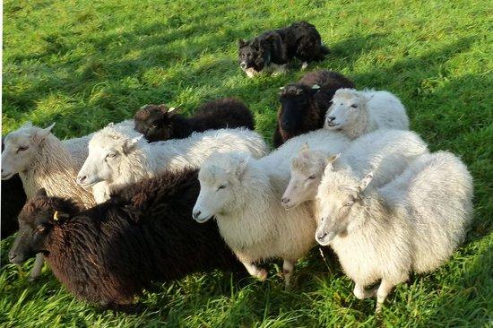 B&B Buitenplaats Natuurlijk Goed :                   Sheepworkjshop