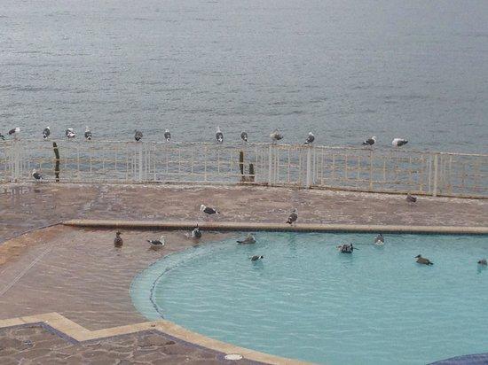 Las Rocas Resort & Spa:                   Birds in the pool