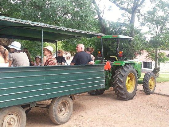 San Pedro de Timote:                   paseo tractor