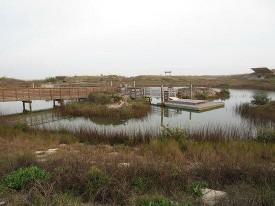 Port Aransas, TX:                   Wetlands at UT Marine Science Center