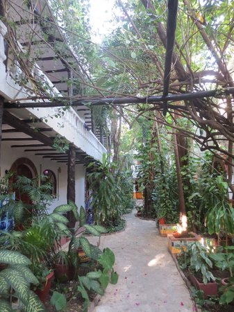 Paraiso Azul's -Casa De Gopala :                   Beetje verwilderde binnentuin