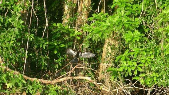 Manatus Hotel: Vogelwelt der Kanäle