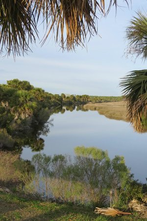 St. Marks National Wildlife Refuge:                   Pond and wetlands..