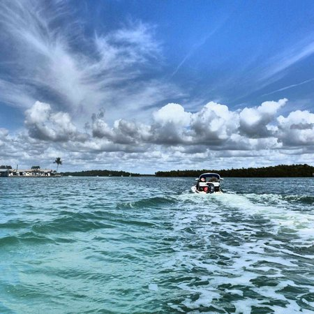 Backwater Adventure:                   Out on more open waters, looking for dolphins