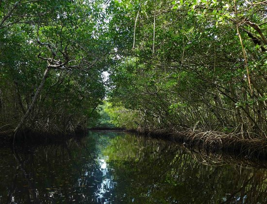 Backwater Adventure:                   View from inside the backwaters of the mangrove area