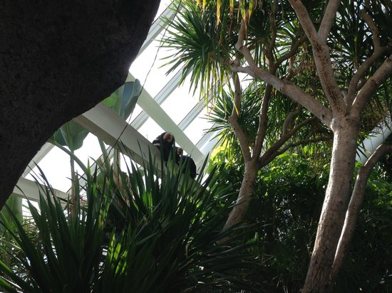 Moody Gardens:                   Jungle Pyramid