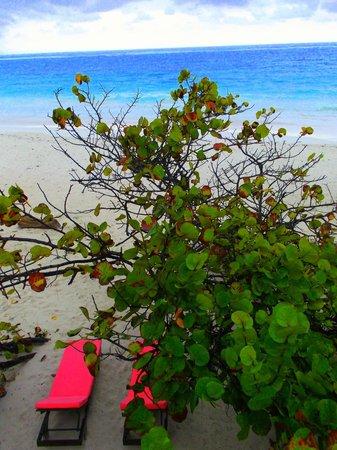 Playa Esperanza:                   View from our deck