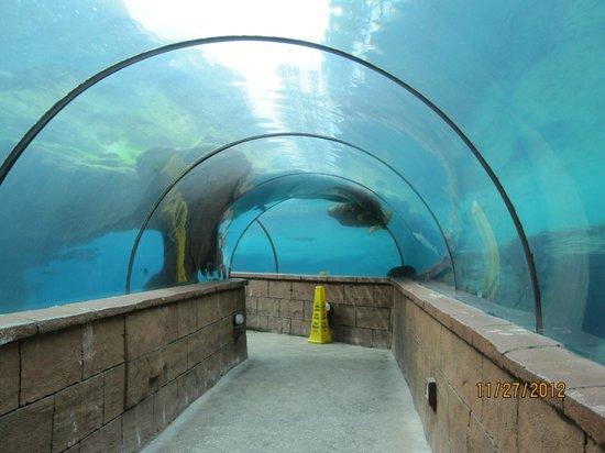 Bahamas Marine Adventure:                   Tunnel