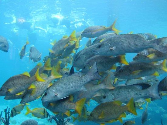 Bahamas Marine Adventure:                   Aquarium