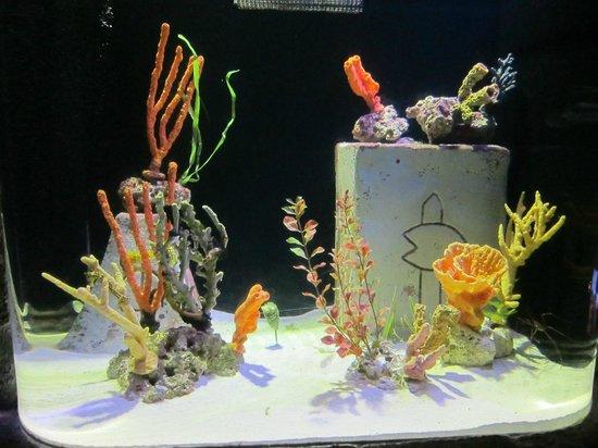 Bahamas Marine Adventure:                   Small live corals
