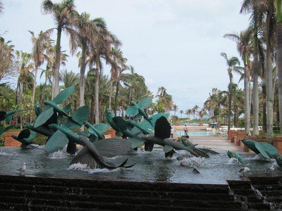 Bahamas Marine Adventure:                   The Atlantis