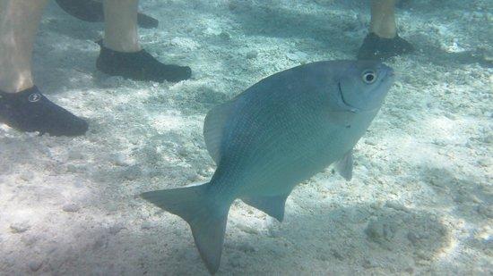 Decameron Marazul :                   acuario