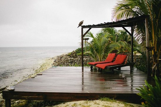 Off The Wall Dive Center & Resort: yoga deck in the rain with large bird