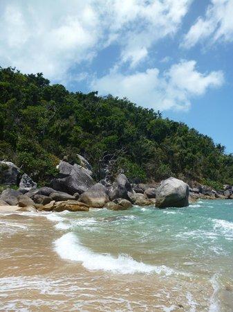 Mission Beach Charters:                   Jungle, Wheeler Island