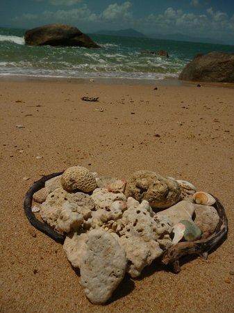 Mission Beach Charters:                   We LOVE Wheeler Island