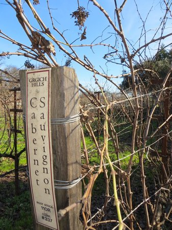Grgich Hills Estate:                   Tasty vines!