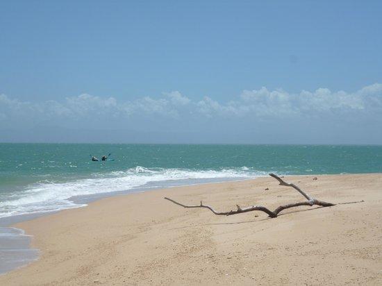 Mission Beach Charters:                   Beach on Wheeler Island