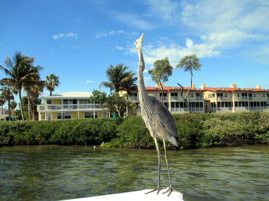 Tradewinds Beach Resort:                   Big blue on dock