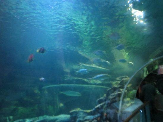 ... to see - Picture of National Sea Life Centre, Birmingham - TripAdvisor