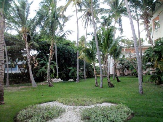 VIK Hotel Arena Blanca:                   Hotel garden's