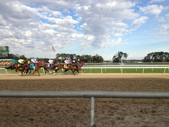 Tampa Bay Downs:                   And they're off!