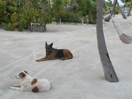 Turneffe Island Resort:                   Some of the locals