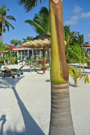 Turneffe Island Resort :                   Cabana