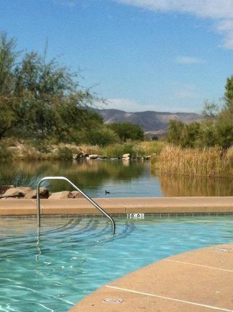 Sheraton Grand at Wild Horse Pass: View from the pool out to the mountains!