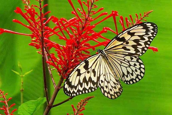 Ryugujo Butterfly Garden: Brilliantly-colored flowers