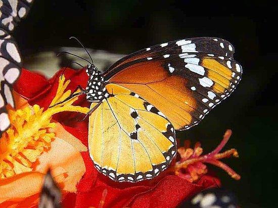 Ryugujo Butterfly Garden: Camera Flash Recommended