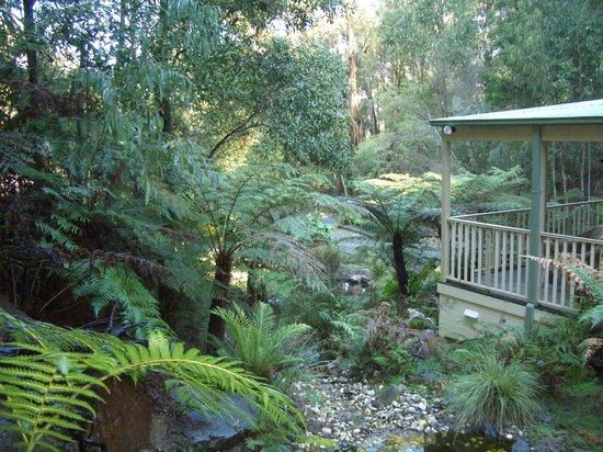 Myers Creek Cascades: Relaxing rainforest setting.