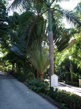 Luxury Bahia Principe Cayo Levantado:                   The beautiful grounds