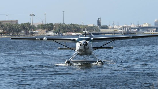 Seawings Seaplane Tours:                   The plane we flew in.