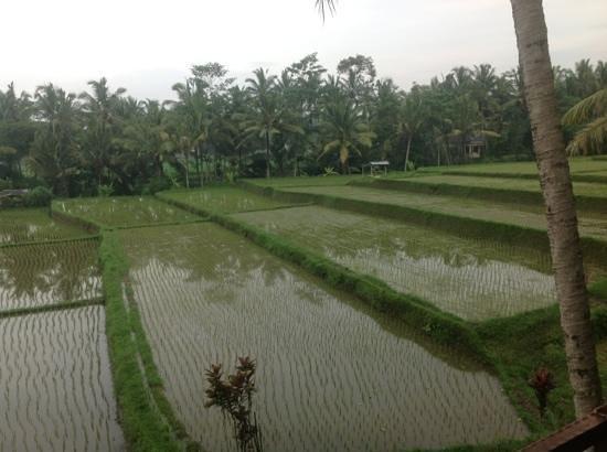 Junjungan Ubud Hotel and Spa: Vue sur la riziere - Chambre Awan 5