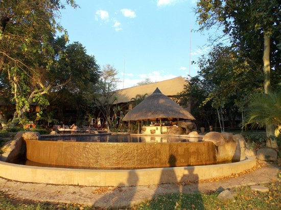 Chobe Marina Lodge : Pool