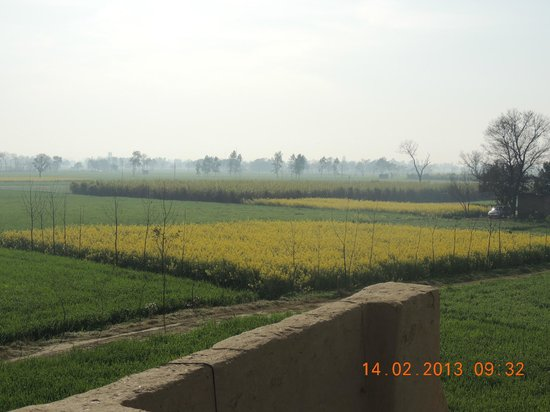 Punjabiyat:                   View from Terrace of Row House