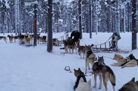 Snow Village:                   Huksy Sledging