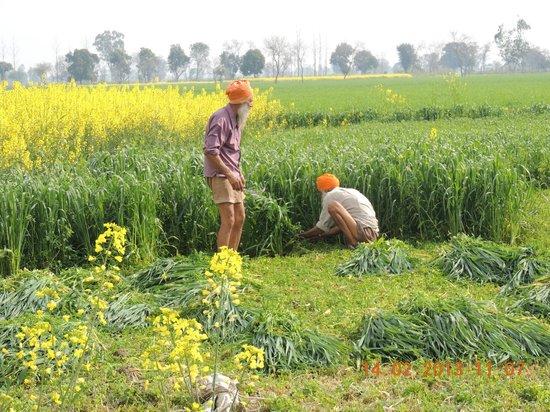 Punjabiyat:                   Farming community