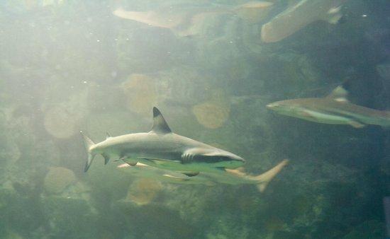 Protaras, Zypern:                   Ocean Aquarium park