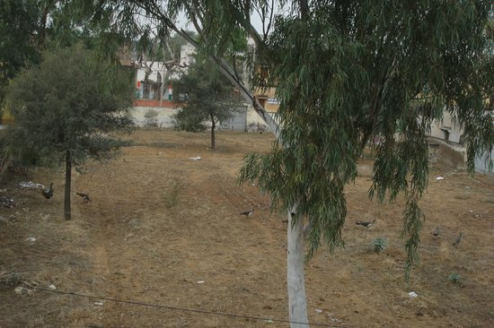 Vivaana:                   View from the room