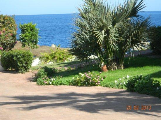 Shores Aloha Resort:                   50 metri spiaggia