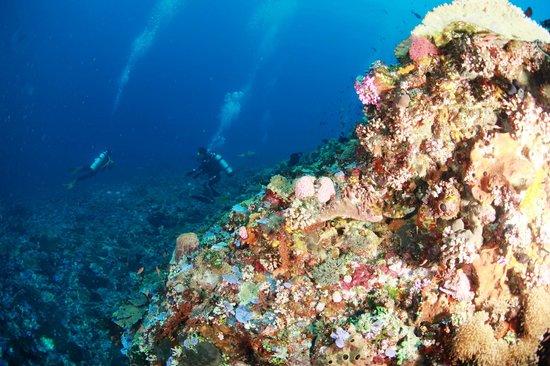 Alor Island, Indonesien: +20m visibility