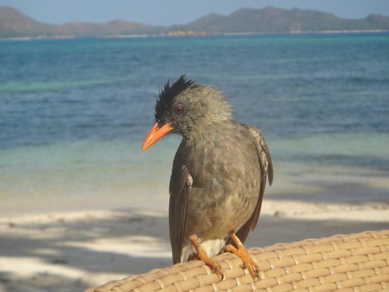 Hotel L'Archipel:                   Завтрак с птицами у кромки прибоя.