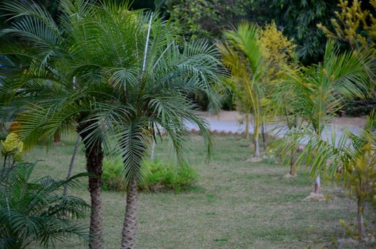 Abrar Palace Wildlife Resort:                   Property is really green
