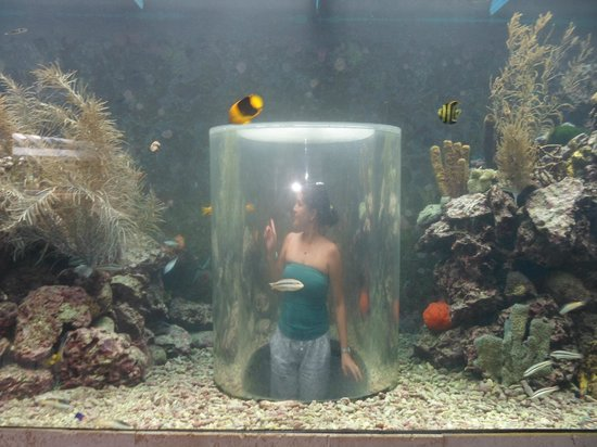 The Royal Sea Aquarium Resort:                   En el Aquarium...