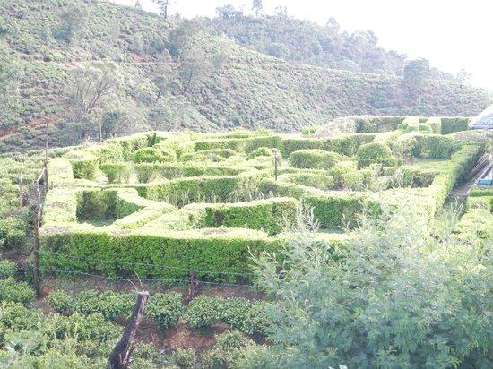 Heritance Tea Factory: Giardini